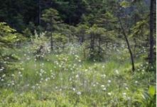 Wildtierwirken1