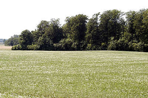 Waldsaum